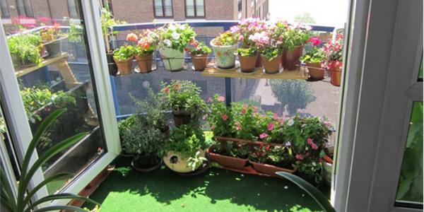 آشنایی با گلهای مخصوص تراس و بالکن